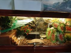 For leopard gecko tank, bigger is not always better. Bigger tank means you need to provide more hides, decorations and water/food bowl. The best size for a tank is 20 gallon long Leopard Gecko Cage, Leopard Gecko Terrarium, Leopard Gecko Habitat, Leopard Geckos, Reptile Habitat, Reptile Room, Reptile Cage, Reptile Enclosure, Pet Cage