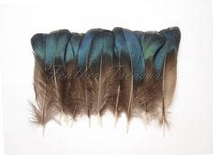 B GRADE blauwe iriserende Lady Amherst veren, Fazant veren, exotische veren, iriserende veren, blauw veren, modevak