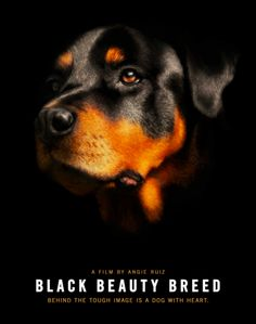 One Night Only: Pro-Rottie Film Coming to Minneapolis | Sidewalk Dog Blog | Mark your calendar: Thursday, July 17th