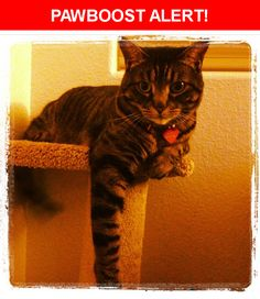 Please spread the word! Maulie was last seen in Henderson, NV 89052.  Description: Timid, has claws, hanging stomach from past litters, tail is slightly bent at the end from an old break.   Nearest Address: Coronado High School, Coronado Center Drive, Henderson, NV, United States