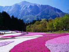 Hitsujiyama Park - Condé Nast Traveler
