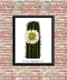 Cactus Flower Plant Art Print Botanical Natural History