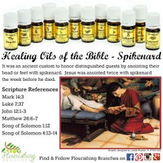 Young Living Essential Oils: 12 Oils of Ancient Scripture Healing Oils of the Bible - Spikenard