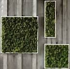 Image result for moss panel diy
