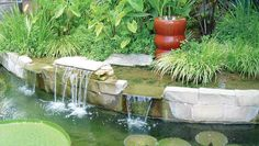 Here at Nelson Water Gardens we are so sold on bog gravel filtration that we will not build a pond without one, and for one solid reason...