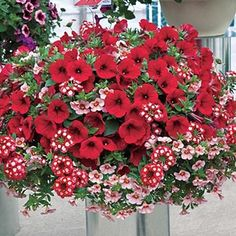 Romance Hanging Basket Collection