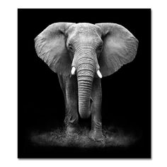 black and white elephant canvas wall art print for living room decor framed 30x40inch - Cadre Elephant