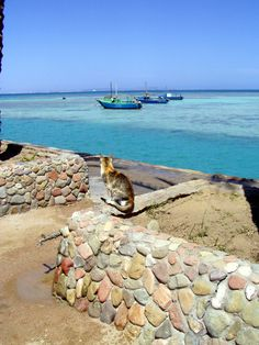 Hurgada beach, Egypt Egypt, Beach, Animals, Animales, The Beach, Animaux, Animal, Animais