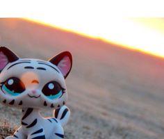 Littlest pet shop cat picture (c) lps_crosst Lps Littlest Pet Shop, Little Pet Shop Toys, Little Pets, Cute Animal Memes, Cute Animals, Lps Collies, Lps Cats, Palace Pets, Modern Toys