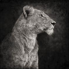 Endangered African Animals