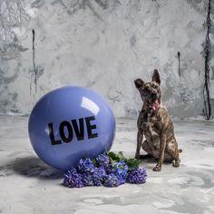 2 foot Big Love Ball with Bailey | Color : Hazy Cosmic Jive | Photo by Bob Garlick