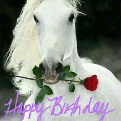 White Horse and Rose - Happy Birthday