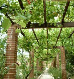 Una de las mejores maneras para practicar el diseño de exteriores orgánico es poder hacer uso de las plantas nativas. Argentina
