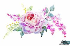Find Rose Watercolor Flowers Vintage Mimosa stock images in HD and millions of other royalty-free stock photos, illustrations and vectors in the Shutterstock collection. Thousands of new, high-quality pictures added every day. Banner Printing, Watercolor Rose, Ikebana, Image Photography, Vintage Flowers, Vector Art, Beautiful Flowers, How To Draw Hands, Clip Art
