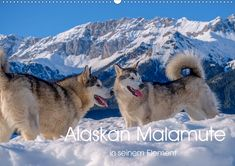 Alaskan Malamute in seinem Element (Wandkalender 2020 DIN quer) Snow Art, House Rabbit, Photo Calendar, Dog Mom Gifts, Alaskan Malamute, Dog Hacks, Create Photo, Unique Photo, Dog Owners