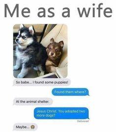 9 Times Wives Told Their Husband That They Now Own A Puppy 9 vezes esposas disseram seu marido que agora possuem um filhote de cachorro Funny Cute, Hilarious, Funny Stuff, Animals And Pets, Baby Animals, Funny Animals, Cute Animals, Dog Memes, Jokes