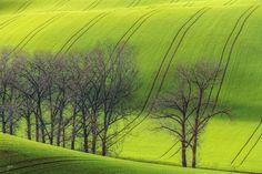 Trees in Moravian waves ...