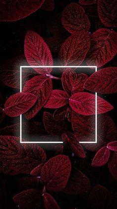 Neon Planter i Geometriske Rammer som