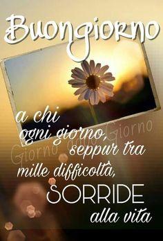 Sorride - 18486