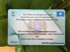 pvc printing offset membership card