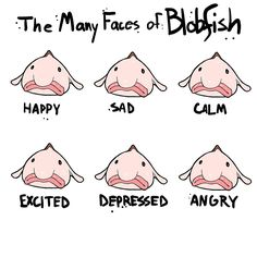 """The Many Faces of Blobfish"" by Upstart 