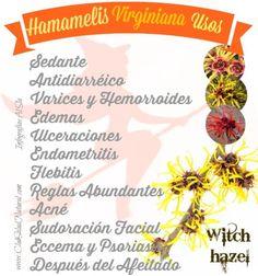 Hamamelis Propiedades Medicinales y Uso Cosmético - Club Salud Natural #salud #botanica #plantas #medicinal