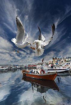 TFSF ONAYLI FOTOĞRAF YARIŞMALARI