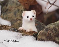 Ermine  http://www.sideriusphotos.ca/wp-content/uploads/2015/01/ermine-great-3signed.jpg