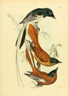 Mammifères et Oiseaux - BioStor