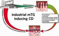 The incidence of celiac disease is increasing worldwide, and human tissue transglutaminase has long been considered the autoantigen of celiac disease Pink Slime, Human Tissue, Little Do You Know, Cross Link, Celiac Disease, Gluten Free Diet, Finding Yourself, Meat, Sensitivity