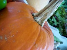 How to cook down a pumpkin for pie and other treats.