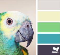 parrot color- like this color palette