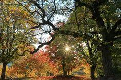La forêt enchantée. Arbres et feuillage d'automne