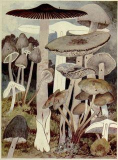 Flowers Nature Forest Mushroom Tape Floral Bullet Journal Botanicals Garden Retro Mushrooms Woodland Wild Mushroom Fungi Tape