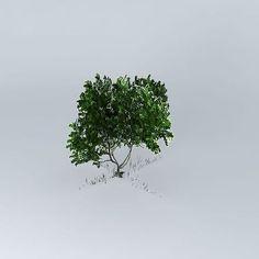 #tree #mangrove - cgtrader https://www.cgtrader.com/free-3d-models/plant-tree/other/grey-mangrove