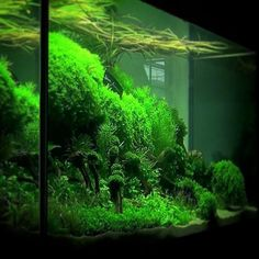 Beautiful, lush and green aquascape for our aquarium/pond of the day