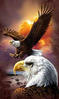 vips..🍀 Bald Eagles, Eagles Live, Eagle Art, Hawks, Foreseeable Future, Eagle Head, Decorative Stickers, Wall Stickers, Eagle Animals