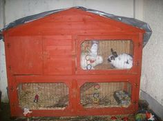 2 rabbits with large hutch for sale in Liverpool. Used second hand Rabbits for sale in Liverpool. 2 rabbits with large hutch available on car boot sale in Liverpool. Free ads on CarBootSaleMerseyside online car boot sale in Liverpool - 8465