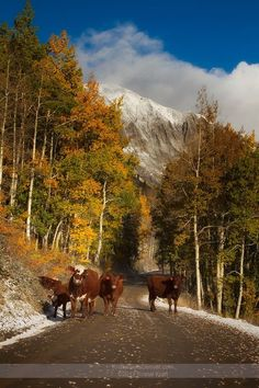 Gothic Road Crested Butte CO