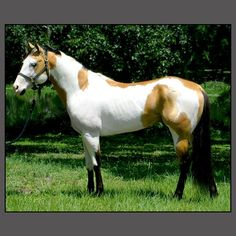 Gorgeous colors- so many striking pinto/paints and Appaloosa horses!