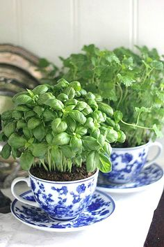 18 Brilliant and Creative DIY Herb Gardens for Indoors and Outdoors  You can plant herbs in your garden or in regular pots. But this post share 18 creative herb garden ideas that are both neat and different. |  http://herbsandoilshub.com/18-brilliant-and-creative-diy-herb-gardens-for-indoors-and-outdoors/