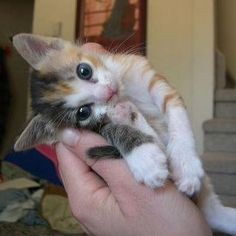 and once again... i want a kitty :(