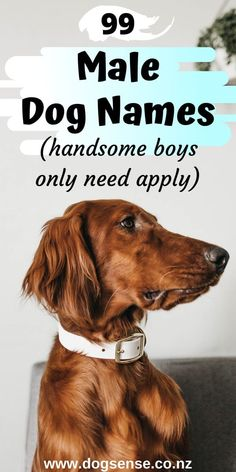 dog names boy 99 Best boy dog names. This cute list is perfect for the male dog who wants a unique name! Male Dog Names List, Cool Dog Names Boys, Male Dog Names Unique, Good Boy Names, Cute Puppy Names, Cute Names For Dogs, Girl Dog Names, Pet Names, Animal Names Unique