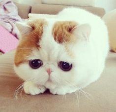 I love this cat. Too cute.