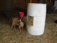 55 gal plastic drum feeder  1- cut top off 2- cut 3 holes around the sides 3- put a cement block in the bottom, 4-fill with flakes of hay from the top.