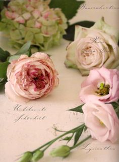 Pretty in Pink. I love blush-hued peonies, camellias, roses ...