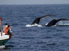 Vacaciones camping y surf en la Playa de Puerto López - Viajes Turismo Aventura y Lugares turisticos de Ecuador Playas