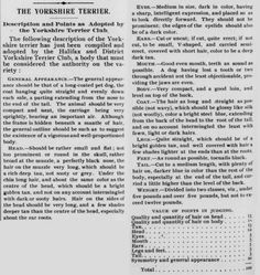 Description and Points of the Yorkshire Terrier, as adopted by the Halifax and District Yorkshire Terrier Club - Fancier's Journal - April 25th 1891