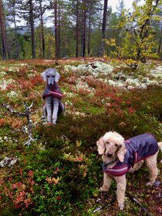 Issa and Atlas in Sälen. Sweden