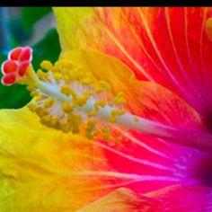 Neon flower. by kara